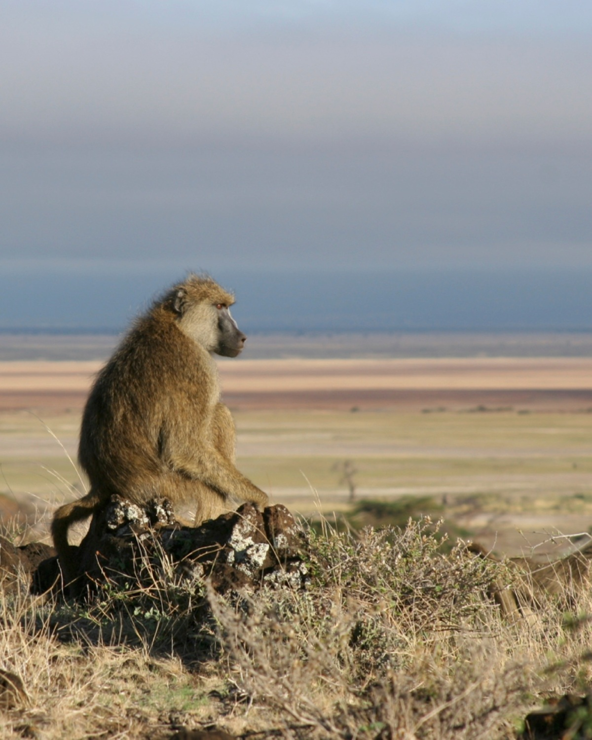 Article in focus: Group Living and Male Dispersal Predict the Core Gut Microbiome in Wild Baboons