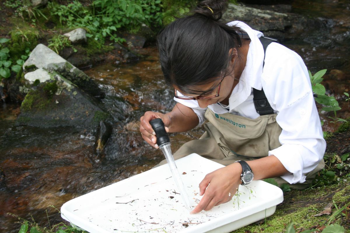 Article in focus: Thermal acclimation ability varies in temperate and tropical aquatic insects from different elevations