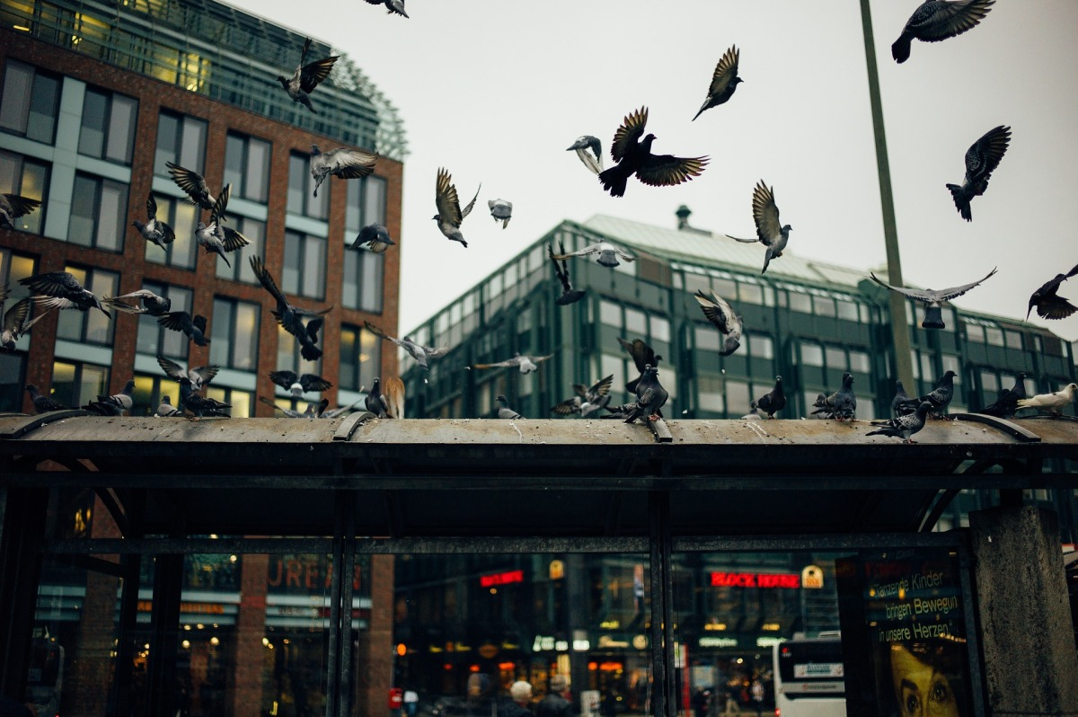 Symposia in Focus: Behavioral and physiological adaptation to urbanenvironments