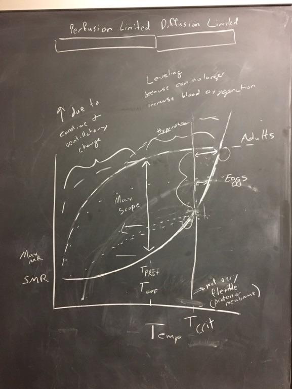 HMTL_Chalkboard