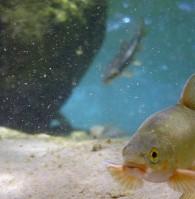 NativeFish - Clinton Moran.jpg