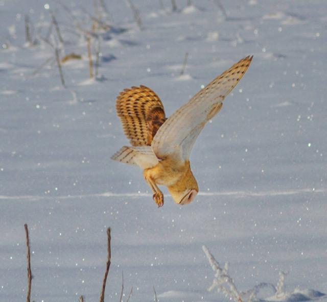 s6 owl for blog 2020 pre blog .jpg